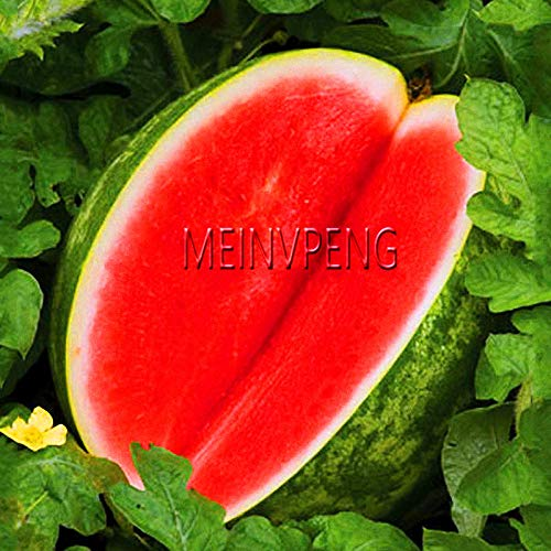hot Sale!Melon Seeds seedless Watermelon Plants Fruit Plant Variety Fresh Cool Summer Seeds Plant for Home Garden, 30seed