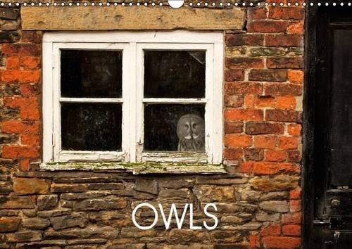 Owls 2016: Owl photography (Calvendo Animals) por Mark Bridger