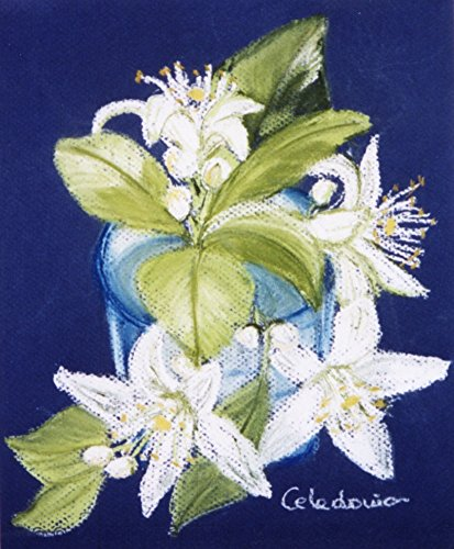 Hand painted picture with cake on paper orange blossom picture of hand painted picture with cake on paper orange blossom picture of white flowers colors mightylinksfo
