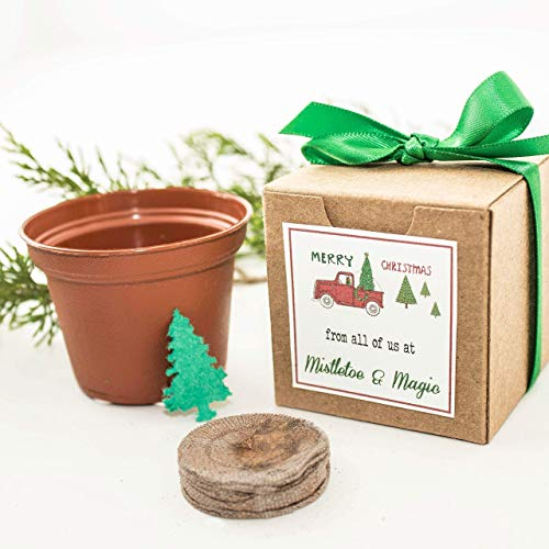 Grow a Christmas Tree Mini Garden Gift Set | Party Favors  Personalized Holiday Gift Idea | Optional DIY Assembly Set of 12