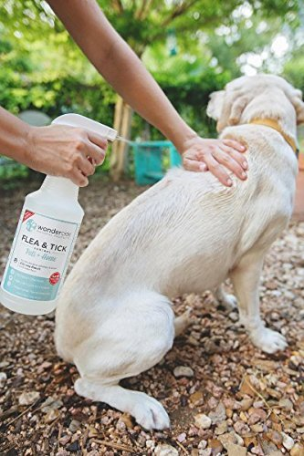 getting-rid-of-fleas-on-dogs