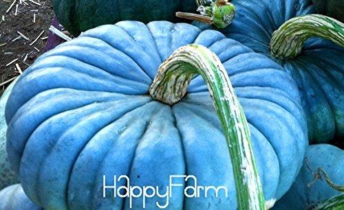 Rare Pumpkin Seeds - 8