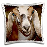 "3dRose Nubian Dairy Goat Doe White Stripe Caprine Square Pillow Case, 16 x 16"""