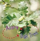 Acorn to Oak Tree (LifeCycles)