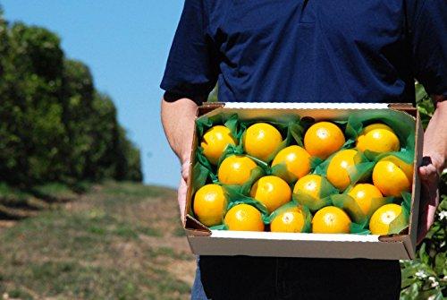 fresh-florida-valencia-juice-oranges-16-pieces