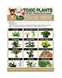 "TLC Safety By Design Enhanced Toxic Plants Flowers TRADEMARKED Poison for Pets Dogs Cats Emergency Home Alone 5"" x 7"" Veterinarian Approved Refrigerator Safety Magnet"