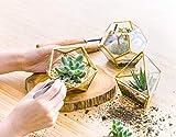 Mkono Mini Glass Geometric Terrarium Container Set