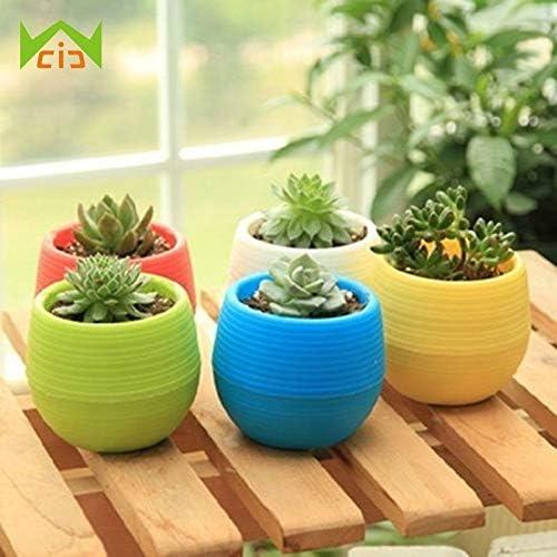 TOLOVI: macetas pequeñas irrompibles para plantas suculentas, macetas de flores, decoración del hogar, oficina, jardín: Amazon.es: Jardín