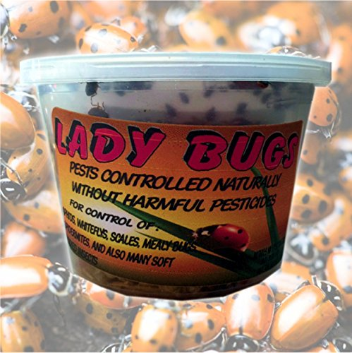 Bazos 1500 Live Ladybugs - Good Bugs - Ladybugs - Ladybugs for Garden - Guaranteed Live Delivery by (1500)