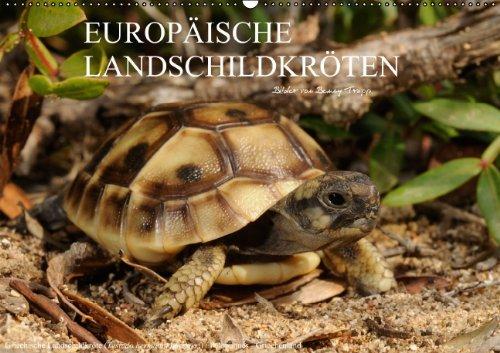 europische-landschildkrten-wandkalender-2014-din-a2-quer-schildkrten-gehren-zu-den-beliebtesten-haustieren-in-mitteleuropa-dieser-kalender-aus-sdeuropa-monatskalender-14-seiten