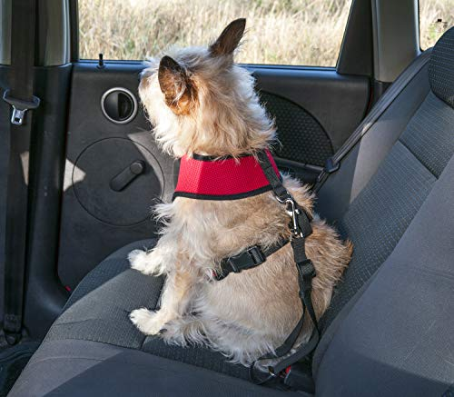 FurHaven Pet Car Belt | Car Seat Dog Safety Belt, Gray, One-Size
