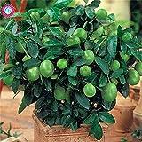 Shopmeeko 20pcs/Bag Kaffir Lime Lemon Fruit Organic Indoor Bonsai Tree for Fome Garden Potted Supplies Citrus Aurantifolia