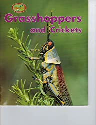 Grasshoppers and Crickets (Minipets)