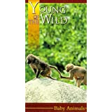 Young of the Wild: Baby Animals