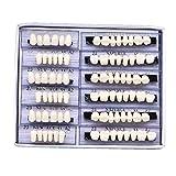 Oral Dentistry Dental Complete Acrylic Resin False Teeth Shade 23 A2 Upper And Lower Dental Set (168pcs)