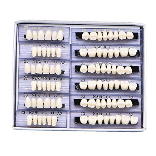 Wecando 168 Pcs Dental Synthetic Resin Tooth Denture