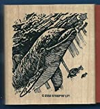 Rubber Stamp Frames Frames New Dolphin Diving Fish Ocean Scene Under The SEA Life Rubber Stamp