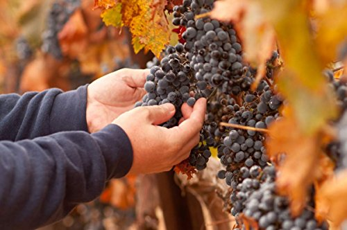 (Wine and Harvest Experience in the Sierra Nevada for One - Tinggly Voucher/Gift Card in a Gift Box)
