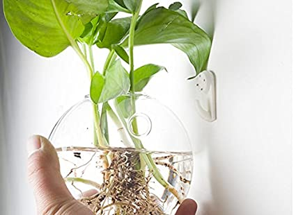 Amazon Smaller Bubble Terrarium Glass Wall Vase For Water