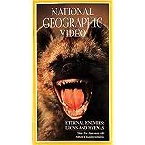 Nat'l Geo: Lions & Hyenas