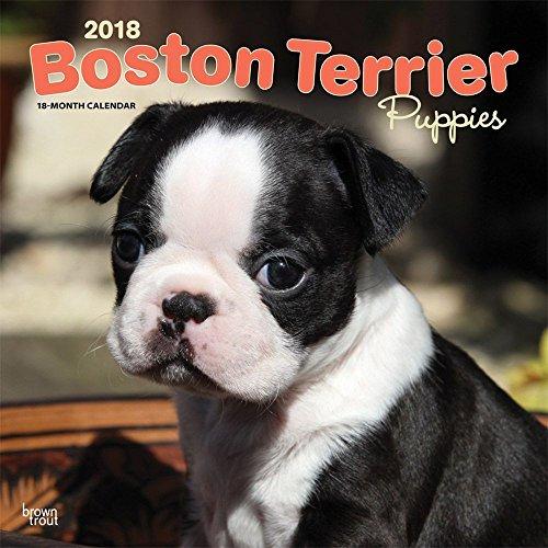 Boston Terrier Puppies 2018 Wall Calendar