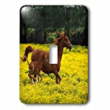 3dRose lsp_80234_1 Arabian Mare and Foal Horses Single Toggle Switch