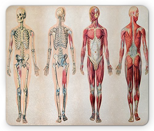 Ambesonne Human Anatomy Mouse Pad, Vintage Chart of Body Front Back Skeleton and Muscle System Bone Mass Graphic, Standard Size Rectangle Non-Slip Rubber Mousepad, Ruby Cream - Skeleton Muscle