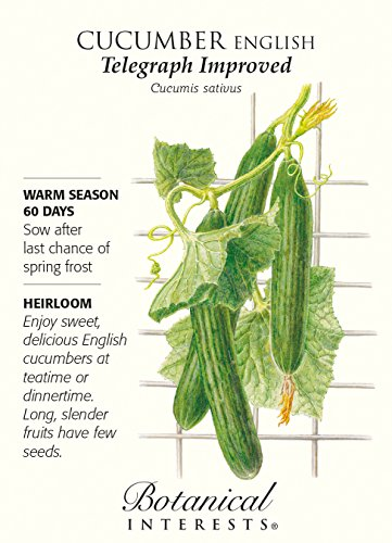 English Telegraph Improved Cucumber - 20 Seeds - Botanical Interests ()