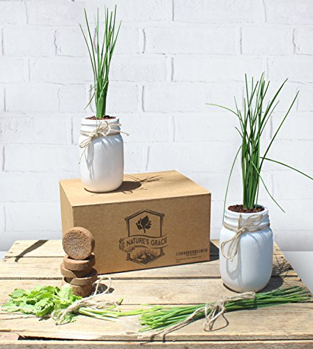 Ceramic Mason Jar Indoor Windowsill Herb Garden Planter Starter Kit | Certified Organic Non GMO Coconut Peat Coir | Culinary Italian Basil Cilantro Thyme Parsley Chive Seeds | Unique Kitchen Gift by Nature's Grace