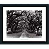 Path In The Oaks #2 Louisiana By Monte Nagler Art Print Poster Picture Framed Decor 22X26 by Framed Art by Tilliams