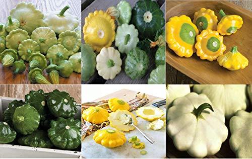 (David's Garden Seeds Collection Set Squash Summer Scallop SL9325 (Multi) 6 Varieties 225 Seeds (Non-GMO, Organic, Heirloom, Hybrid) )