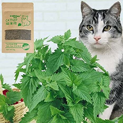 Amazon.com: Cat Toys - Natural Organic Premium Catnip 10g Catmint Menthol Flavor Cat Treats Funny Toys Gatos - Tubes Calorie Friskies Tuna Purebites Salmon ...
