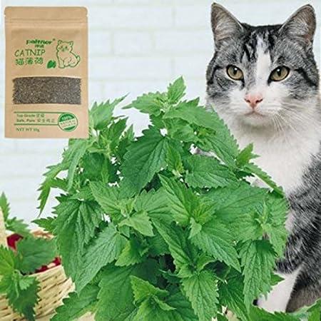 Amazon.com: Cat Toys - Natural Organic Premium Catnip 10g Catmint Menthol Flavor Cat Treats Funny Toys Gatos - Tubes Calorie Friskies Tuna Purebites Salmon ...