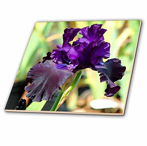 3dRose ct_4124_4 Purple Iris Ceramic Tile, 12-Inch