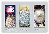 "Buyenlarge 0-587-10011-7-P1827 ""Thelocactus, Bicolor, Var. Wagnerianus"" Paper Poster, 18"" x 27"""