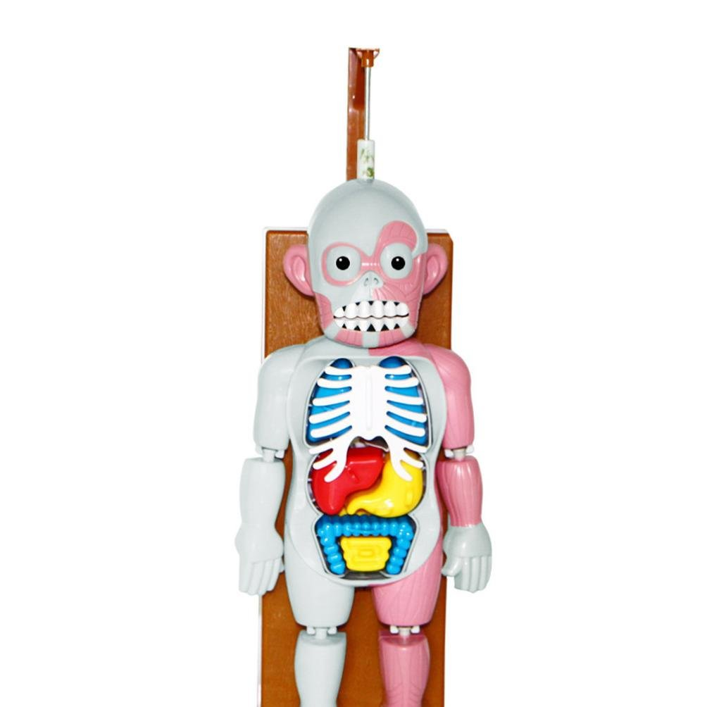 Sacow Spoof Tricky Toys Scary Human Organ Body Model Toy Terror Dummy Music Table Game by