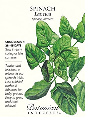 Lavewa Spinach Seeds - 3 grams - Botanical Interests