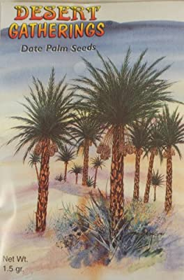 Date Palm Seeds - Plant Your Own - Contains Aprox 6 Seeds - Grow Your Own Garden - Tree - History and Planting Instructions