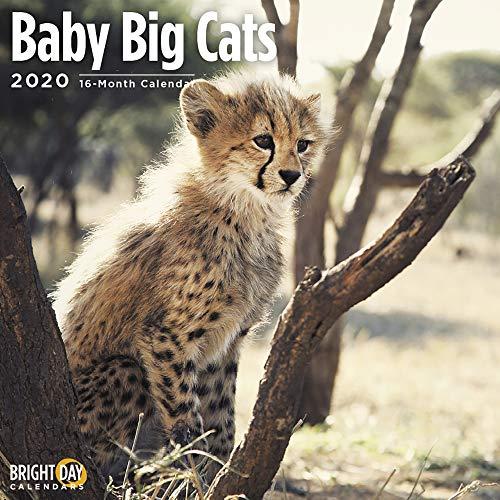 2020 Baby Big Cats Wall Calendar