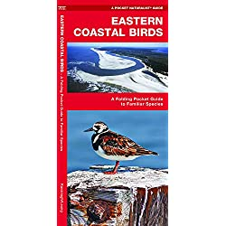 Eastern Coastal Birds: A Folding Pocket Guide to Familiar Species (Wildlife and Nature Identification)