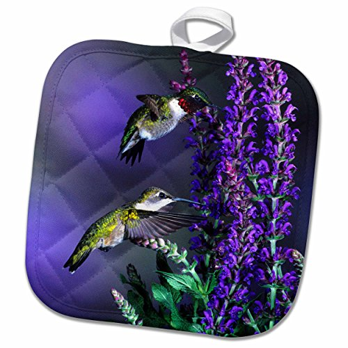 3D Rose Ruby Throated Hummingbirds at Lubeca Meadow Sage Salvia Pot Holder, 8 x 8 by 3dRose