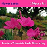 Outdoor Plants Mallow for Planting 120Pcs, Perennial Courtyard of Flower, Brightly Colored Lavatera Trimestris