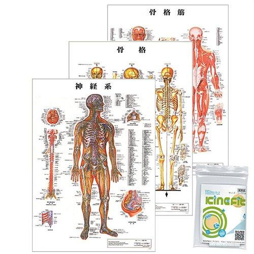 人体 解剖学 チャート ポスター 3枚セット(骨格筋骨格神経図) + キネシオロジーテープ キネフィットお試し用5cm×50cm B01KH9167Y