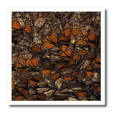 3dRose ht_86651_3 Mexico Monarch Butterfly (Danaus Plexippus)-Gavriel Jecan-Iron on Heat Transfer for Material, 10 by 10-Inch, White