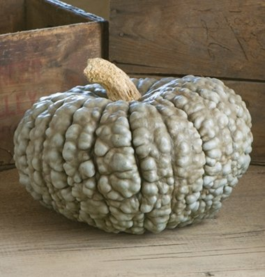 David's Garden Seeds Pumpkin Marina di Chioggia D2625 (Green) 25 Open Pollinated Seeds