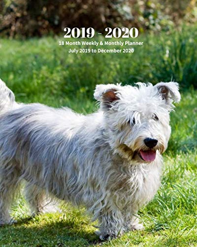 2019 - 2020 | 18 Month Weekly & Monthly Planner July 2019 to December 2020: Glen of Imaal Terrier Dog Breed Pets Vol 16 Monthly Calendar with U.S./UK/ ... Holidays– Calendar in Review/Notes 8 x 10 in.