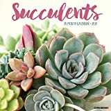 Succulents 2021 Wall Calendar