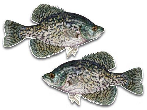 Black crappie fish vinyl decals 5.5