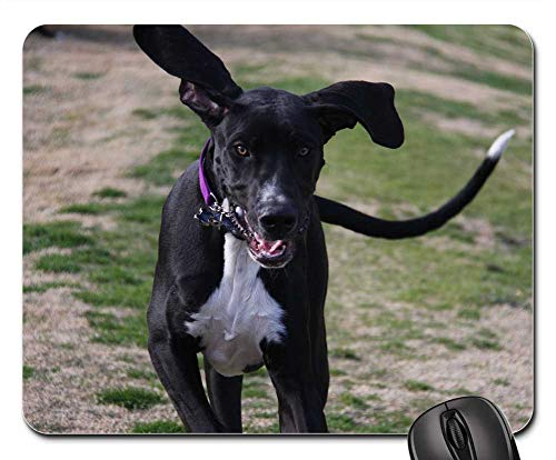 - Mouse Pads - Dog Great Dane Ears Happy