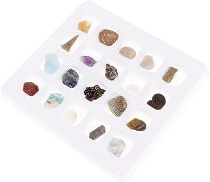 perfeclan 20 Piezas Caja de Muestra de Minerales y Rocas Reales Regalo de Cumpleaños Navidad para Entusiastas de Ciencia: Amazon.es: Juguetes y juegos